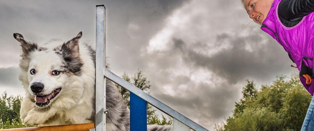 hundesport-agility-thomas-suster-oberhausen