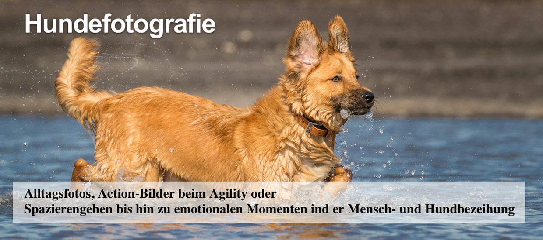 hundefotografie-oberhausen-tierfotografie-bottrop-muelheim-umgebung-thomas-suster